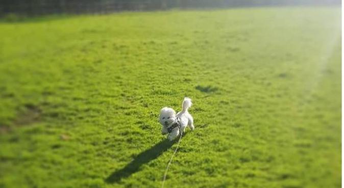 Practically Pawfect - Sadie's Sitting Service, dog sitter in Northampton, UK