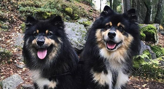 Hundeelsker vil passe din hund!, hundepassere i Oslo