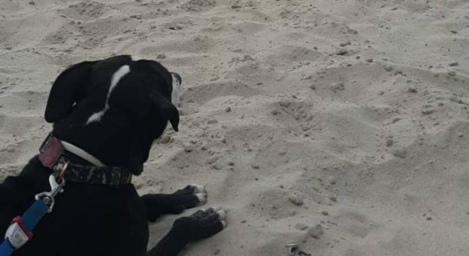 Expert dog walker and lover, dog sitter in Manchester