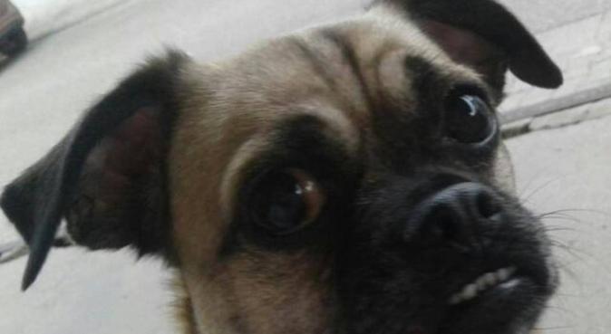 Ihre Hunde in liebevollen und erfahrenen Händen, Hundesitter in Worms