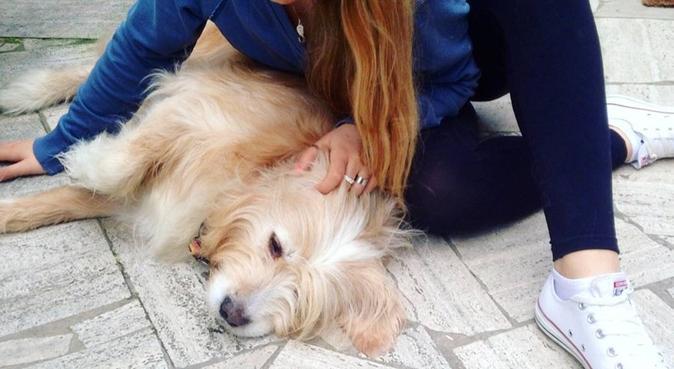 Tante coccole,passeggiate e giochi al parco❤️, dog sitter a Roma, RM, Italia
