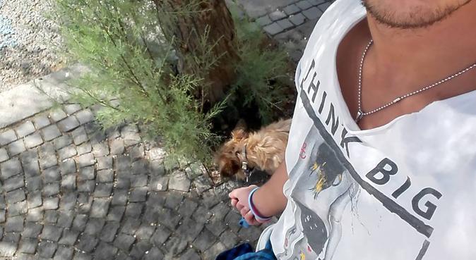 Coccole e tanto amore da dare ai vostri cani, dog sitter a Torre del Greco