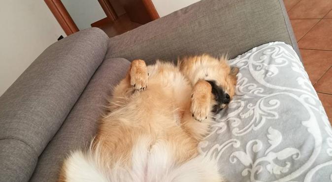 Dog sitter provincia di Brescia, dog sitter a Azzano Mella