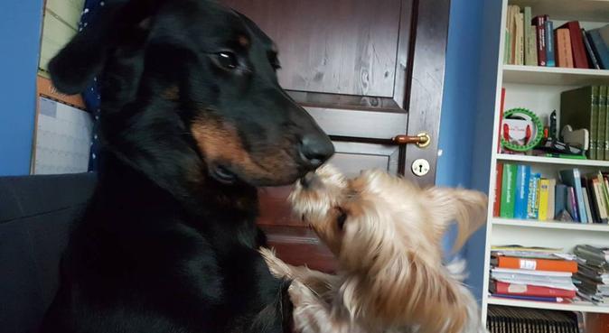 Seriös hundpassning för hundens bästa!, hundvakt nära Skurup