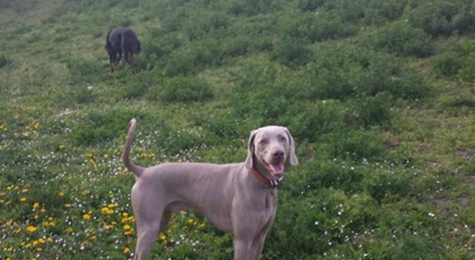 Promenades d'amour, dog sitter à Poissy