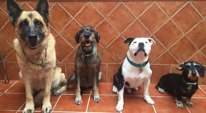 Adiestramiento básico y paseo para tu perro., canguro en Utrera