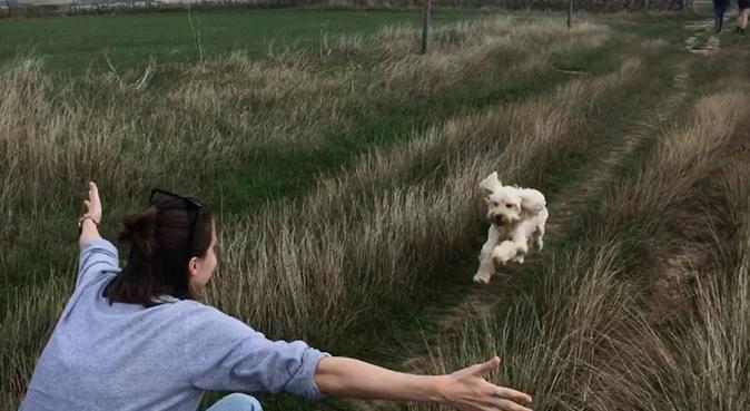 Use Caroline as your canine lifeline, dog sitter in Bristol