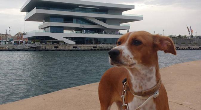 Cuido tu perrito, canguro en Valencia