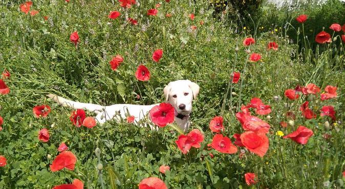 Alojamiento para perros felices en La Floresta, canguro en La Floresta