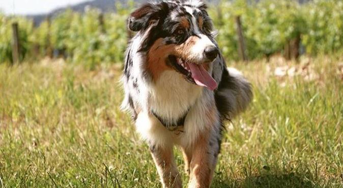 Pour le bien-être de votre animal, dog sitter à Tours