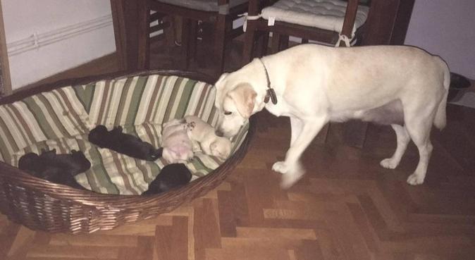 Buone e lunghe passeggiate con un amante dei cani, dog sitter a Bologna, BO, Italia