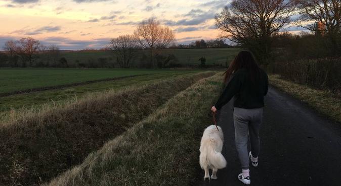 Dog Walking and Sitting in Brighton, dog sitter in Brighton
