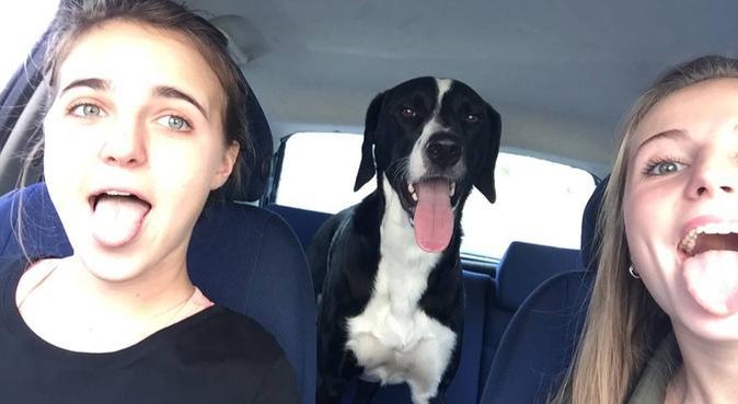 Câlins canin à volonté sur Albi, dog sitter à Albi