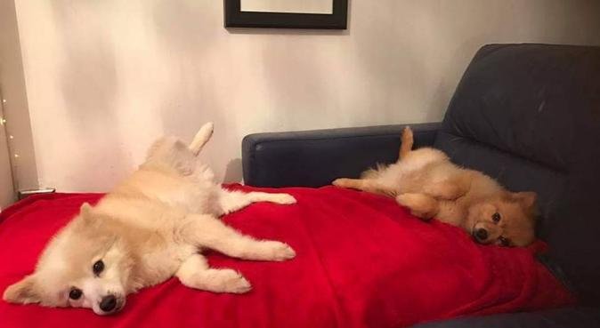 Attention, treats, runs, cuddles and adventures!, dog sitter in Aberdeenshire