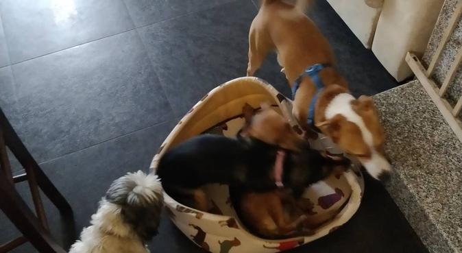 Amore rispetto e tanta passione per gli Animali o, dog sitter a Roma