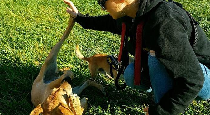 Hogar perruno con finca, juegos y descanso, canguro en Oviedo, España
