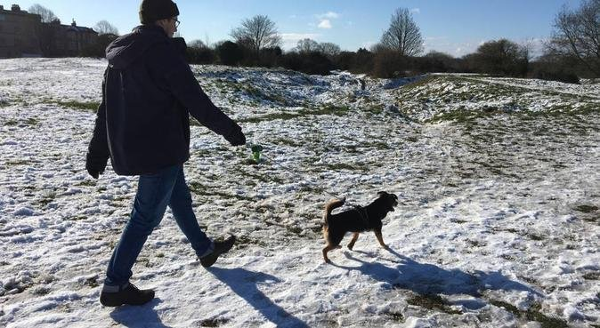 Looking for a Fun Dog Walker? - Happy to Help!, dog sitter in Bristol