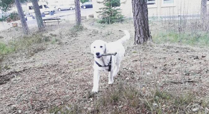Kom og ha det gøy med oss :-), hundepassere i Oslo