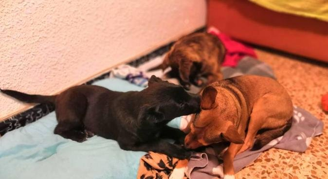 Veterinaria cuida perritos, canguro en Zaragoza, España