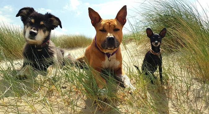 Pfötchenzeit- Ihre Tierbetreuung, Hundesitter in Sprockhövel, Deutschland