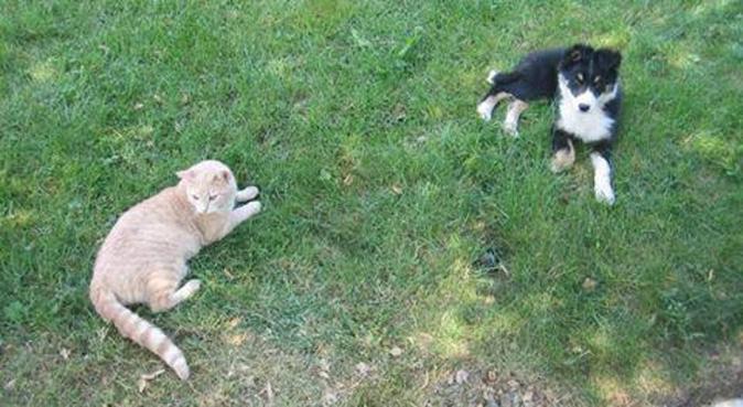Dogsitter amorevole e giocherellona, dog sitter a Parma, PR, Italia