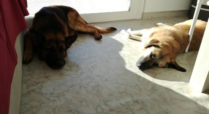 Sarò lieto di ospitare i vostri animali del cuore, dog sitter a Ponte San Nicolò