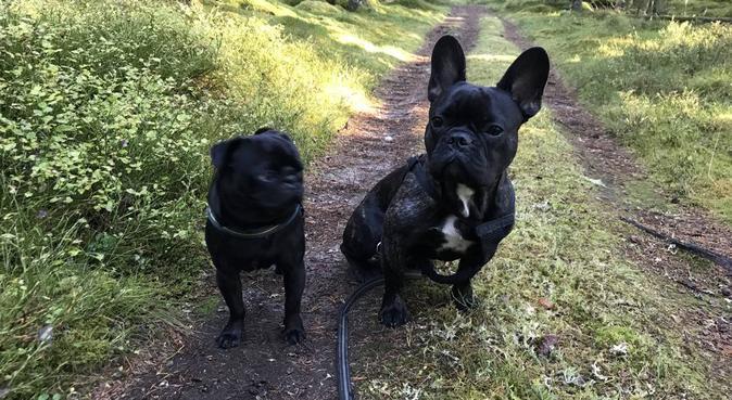 Hundpassning i lantlig miljö nära stan, hundvakt nära Vellinge, Sverige