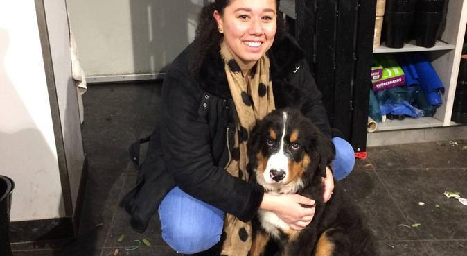 Honden uitlater in Nieuw sloten/Hoofddorp/Haarlem, hondenoppas in Hoofddorp