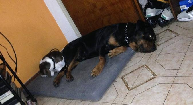 Dog mom. Paseo, cuidado y aseo para tu mascota, canguro en Barcelona