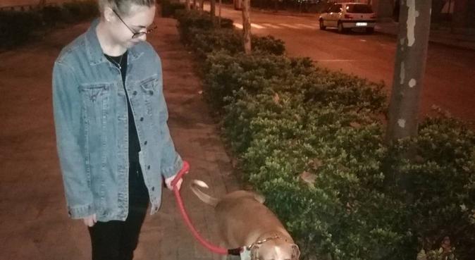 Paseo perros-dogs walk🐶❤️(uso transporte público), canguro en Madrid