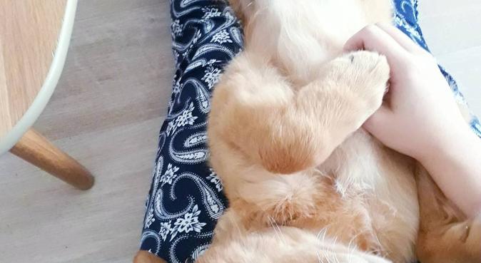Gardienne attentive et câline, dog sitter à Metz