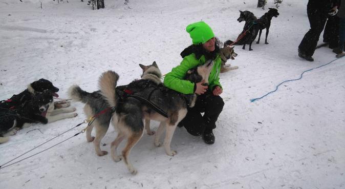 Dogsitter presso il proprietario e passeggiate, Hundesitter in Bolzano, Province of Bolzano - South Tyrol, Italy