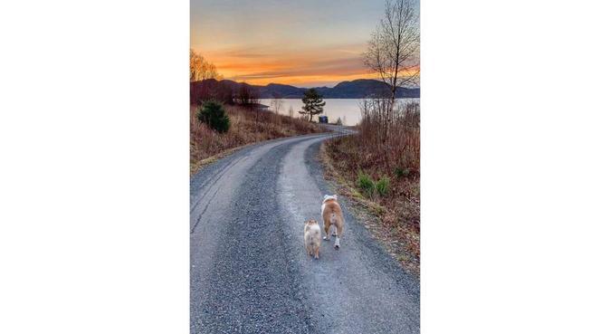 La meg lufte og kose med din hund❤️, hundepassere i Tønsberg