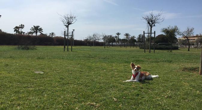 (DE/ENG/ESP)Amor, cariño Libertad y responsabilida, canguro en Palma de Mallorca, España