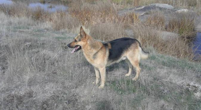 Paseador de perros, canguro en Salamanca