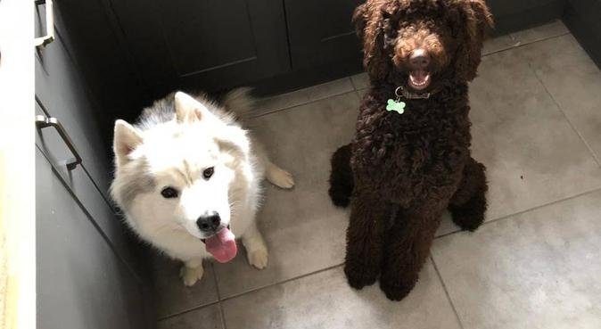 Cuddles and walkies for fur babies, dog sitter in Slough