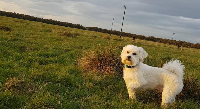 Heaton Walkies, dog sitter in Newcastle upon Tyne, UK