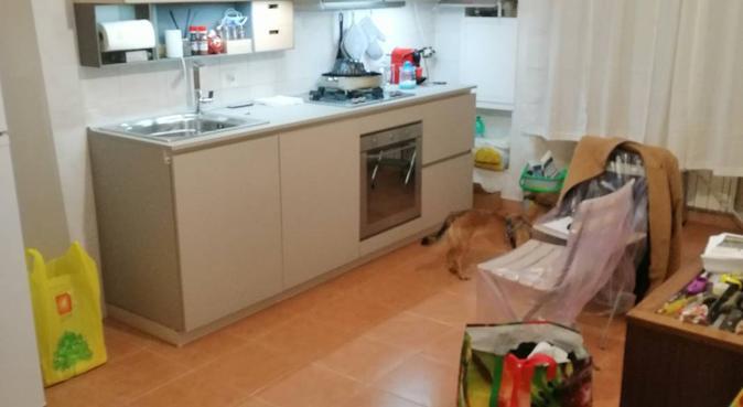 Amare e giocare con gli animali, dog sitter a Roma, RM, Italia