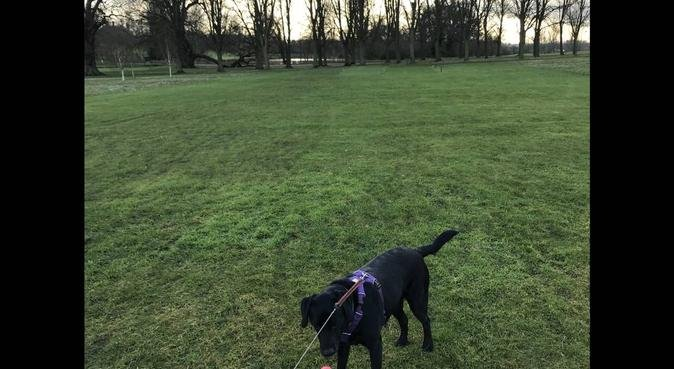 Dog walking and fun in Oxford :), dog sitter in Oxford