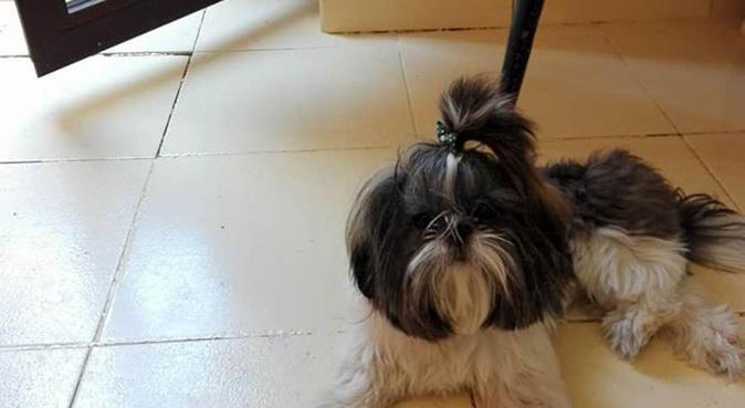 Cuidador de perros con mucha experiencia, canguro en Granada