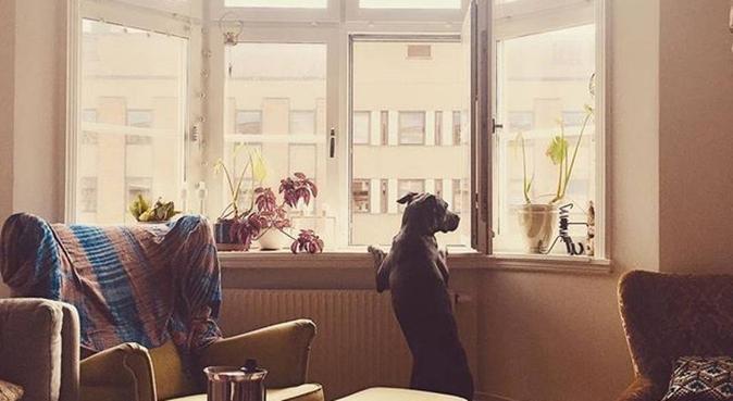 Djur- och naturälskande hundmagnet, hundvakt nära Malmö, Sverige