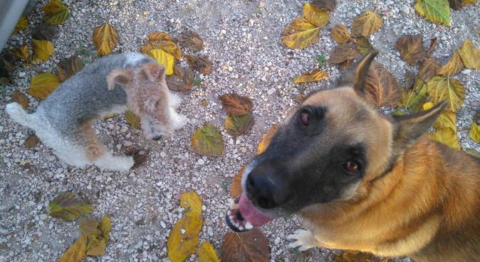 Cuidamos de tu perro, zona villacerrada, canguro en Albacete