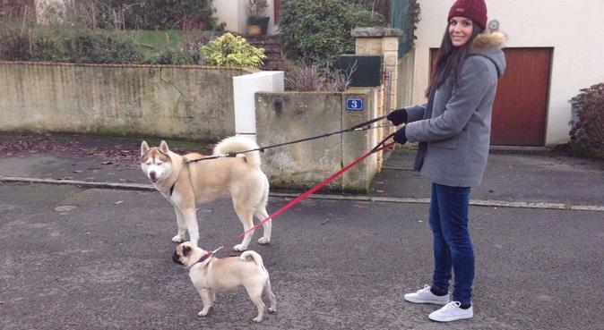 Wouafsitter, dog sitter à Noyal-Châtillon-sur-Seiche, France
