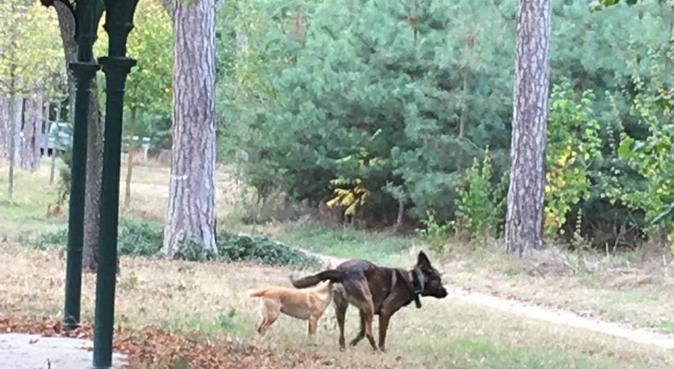 Promeneur expérimenté et organisé, dog sitter à Levallois-Perret