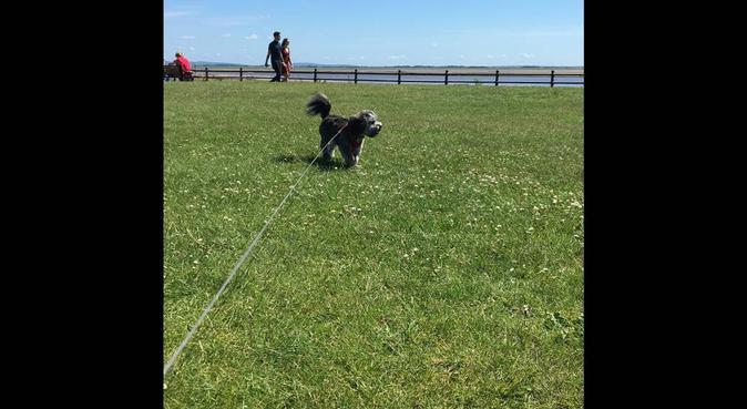 Walking wonders! Puppy & doggy walking in preston, dog sitter in Preston