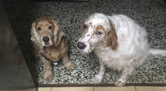 Paseadora de perros y guardería de día, canguro en Valencia