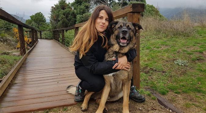 Adiestramiento Canino y Paseos, canguro en Madrid