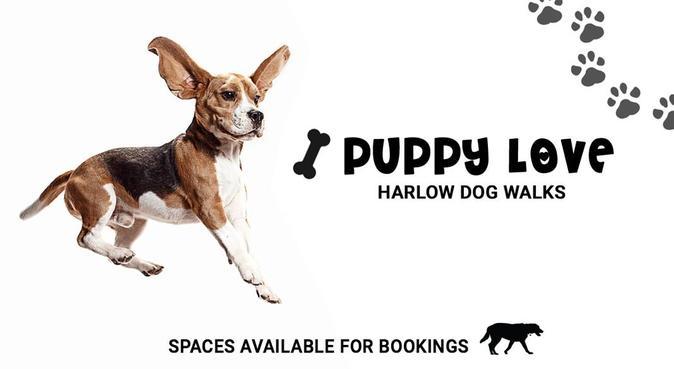 Puppy Love Dog Walks - Harlow, dog sitter in Harlow