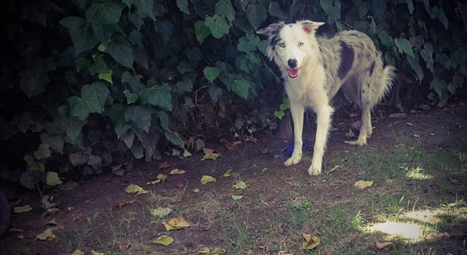 passeggiate e divertimento, dog sitter a Torino