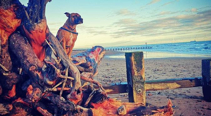 Dog walking and adventuring in Aberdeen, dog sitter in Aberdeen